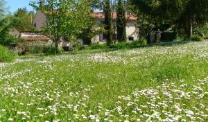 lente voor huis 2-crop