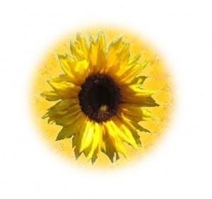 zonnebl 8-crop
